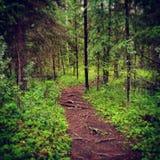 Για πάντα πράσινος Στοκ φωτογραφίες με δικαίωμα ελεύθερης χρήσης