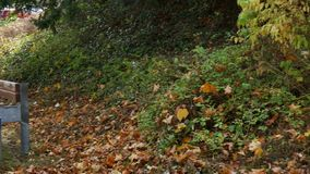 Για τους πεζούς διάβαση πεζών με τους πάγκους και το κίτρινο φύλλωμα φιλμ μικρού μήκους
