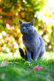 Για χάδια γάτα Στοκ Φωτογραφίες