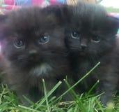 Για χάδια γατάκια Cutie στοκ εικόνες