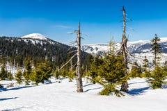 Γιγαντιαία βουνά Krkonose το χειμώνα - Czechia στοκ φωτογραφία με δικαίωμα ελεύθερης χρήσης