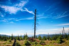 Γιγαντιαία βουνά Medvedin- Στοκ εικόνες με δικαίωμα ελεύθερης χρήσης
