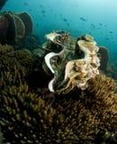 γιγαντιαία θάλασσα μαλα& Στοκ εικόνα με δικαίωμα ελεύθερης χρήσης