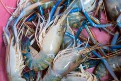 Γιγαντιαία του γλυκού νερού γαρίδα, φρέσκες γαρίδες Στοκ Εικόνα