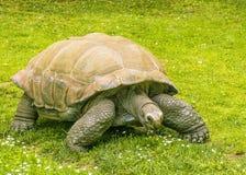 γιγαντιαία χελώνα Στοκ φωτογραφία με δικαίωμα ελεύθερης χρήσης