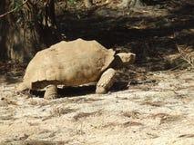 γιγαντιαία χελώνα Στοκ φωτογραφίες με δικαίωμα ελεύθερης χρήσης