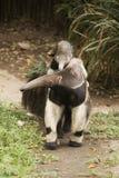 Γιγαντιαία Anteater και μωρό Στοκ φωτογραφίες με δικαίωμα ελεύθερης χρήσης