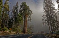 Γιγαντιαία sequoia δέντρα στην κοιλάδα Yosemite Στοκ Εικόνες
