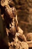 Γιγαντιαίες κατσαρίδες Στοκ φωτογραφία με δικαίωμα ελεύθερης χρήσης