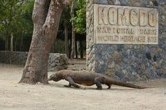 Γιγαντιαίος δράκος komodo στον όμορφο βιότοπο φύσης σε ένα μικρό νησί στην ινδονησιακή θάλασσα στοκ φωτογραφίες