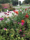 Γιγαντιαίος σκώρος στα λουλούδια στοκ εικόνες με δικαίωμα ελεύθερης χρήσης