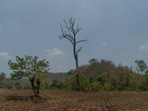 Γιγαντιαίο δέντρο χαλασμένο στο τροπικό δάσος Στοκ εικόνες με δικαίωμα ελεύθερης χρήσης