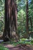 γιγαντιαίο δέντρο Στοκ εικόνες με δικαίωμα ελεύθερης χρήσης
