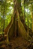 γιγαντιαίο δέντρο Στοκ Εικόνες