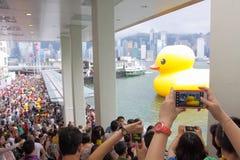Γιγαντιαίο λαστιχένιο Χονγκ Κονγκ επισκέψεων παπιών στοκ φωτογραφίες με δικαίωμα ελεύθερης χρήσης