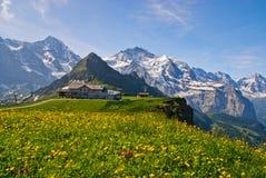 Γιγαντιαίο βουνό και μικρός κίτρινος τομέας λουλουδιών στοκ φωτογραφία