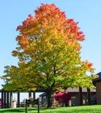 Γιγαντιαίο δέντρο στο πάρκο με τα ίχνη και τη στηργμένος περιοχή Στοκ φωτογραφία με δικαίωμα ελεύθερης χρήσης