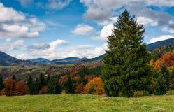 Γιγαντιαίο κομψό δέντρο στο ορεινό φθινοπωρινό τοπίο Στοκ Φωτογραφίες