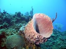 γιγαντιαίο σφουγγάρι βαρελιών Στοκ Φωτογραφία