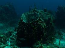 Γιγαντιαίο σφουγγάρι βαρελιών στοκ εικόνες με δικαίωμα ελεύθερης χρήσης