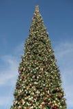 Γιγαντιαίο χριστουγεννιάτικο δέντρο ενάντια Στοκ εικόνα με δικαίωμα ελεύθερης χρήσης