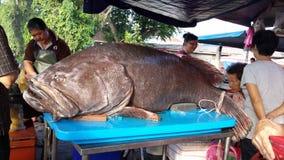 γιγαντιαίο grouper Στοκ Εικόνες