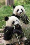γιγαντιαίο panda στοκ εικόνες με δικαίωμα ελεύθερης χρήσης