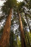 Γιγαντιαίο Sequoia εθνικό μνημείο Στοκ φωτογραφίες με δικαίωμα ελεύθερης χρήσης