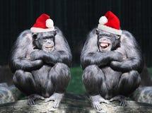 Γιορτή Χριστουγέννων Στοκ εικόνες με δικαίωμα ελεύθερης χρήσης