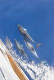 Γιοτ συνοδειών δελφινιών Στοκ Φωτογραφίες