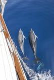 Γιοτ συνοδειών δελφινιών Στοκ Εικόνες