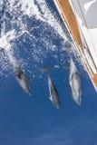 Γιοτ συνοδειών δελφινιών Στοκ φωτογραφία με δικαίωμα ελεύθερης χρήσης