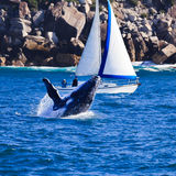 γιοτ φαλαινών Στοκ Εικόνα