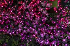 Γιρλάντα λουλουδιών στο δέντρο Στοκ Εικόνες