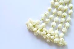 Γιρλάντα jasmine του λουλουδιού Στοκ Εικόνα