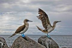 γκαφατζής που πληρώνεται μπλε Στοκ εικόνες με δικαίωμα ελεύθερης χρήσης