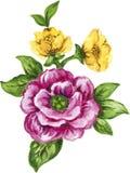 Γκουας κομψό εκλεκτής ποιότητας κίτρινο και πορφυρό ή ιώδες φ Watercolor απεικόνιση αποθεμάτων