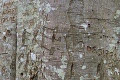 Γκράφιτι δέντρων οξιών Στοκ εικόνες με δικαίωμα ελεύθερης χρήσης