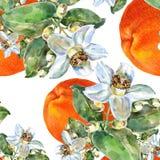 Γκρέιπφρουτ και λουλούδι, watercolor, σχέδιο άνευ ραφής Στοκ Φωτογραφίες