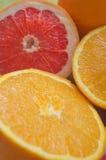 Γκρέιπφρουτ και πορτοκάλια Στοκ Εικόνες
