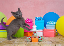 Γκρίζα έκπληξη γενεθλίων γατακιών Στοκ Εικόνες