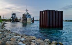 Γκρίζα αλεπού Αμερικανικού Ναυτικό Στοκ Εικόνες