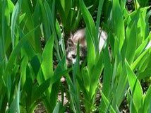 Γκρίζα γάτα μεταξύ των φύλλων των φυτών Στοκ εικόνες με δικαίωμα ελεύθερης χρήσης