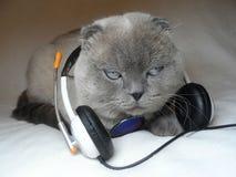Γκρίζα γάτα με τα ακουστικά Στοκ φωτογραφία με δικαίωμα ελεύθερης χρήσης