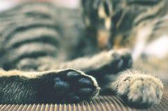 Γκρίζα γάτα που βρίσκεται στην καρέκλα Στοκ εικόνες με δικαίωμα ελεύθερης χρήσης