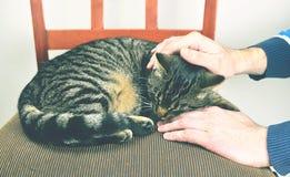 Γκρίζα γάτα που βρίσκεται στην καρέκλα Στοκ Εικόνες