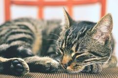 Γκρίζα γάτα που βρίσκεται στην καρέκλα Στοκ φωτογραφίες με δικαίωμα ελεύθερης χρήσης