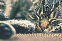 Γκρίζα γάτα που βρίσκεται στην καρέκλα Στοκ Εικόνα