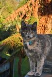 Γκρίζα γάτα στη στέγη κασσίτερου Στοκ Εικόνες