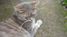 Γκρίζα γάτα στο γκρίζο πεζοδρόμιο Στοκ εικόνα με δικαίωμα ελεύθερης χρήσης